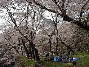 Cherry Blossom Picnic 300x225 Best Time Sakura View Destinations when Travel to Japan