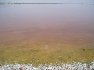 Senegal Pink Lake1 300x225 New Travel Ideas Spots, The Australian Strawberry Milkshake Lake