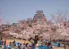 When Hanami Tradition Comes Early in Japan