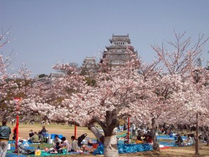 Castle Himeji sakura02 contrasted 300x225 When Hanami Tradition Comes Early in Japan