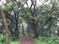 Tai Mo Shan Country Park, Awesome Attraction in Hongkong