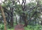 Tai Mo Shan Country Park, Awesome Attraction in Hongkong