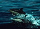 Wish to Swimming wih Dolphins? Visit Mare Island