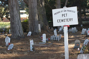 Pet Cemetery  San Francisco 3 300x199 Make Your Heart Beat Faster in This Some Graves
