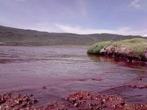 Laguna roja 300x225 Strangest Lagoon in Chile, Laguna Roja