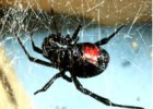 Holiday with Toxic Poisonous Spider? Try this