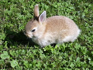 Rabbit small 300x225 Big Rabbit Appearance from Space in Italy