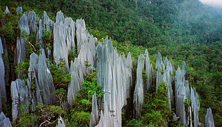 Pinnacles at Mulu Visit The Batman Cage