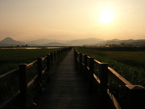 Suncheon Bay 300x225 Enjoying Overlay Reed in Suncheon Bay Wetlands