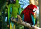 Bali Bird and Reptile Park