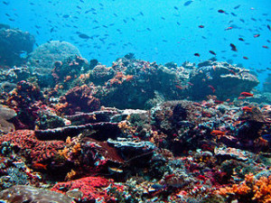 Nusa Lembongan Reef 300x225 Lets Diving in Bali