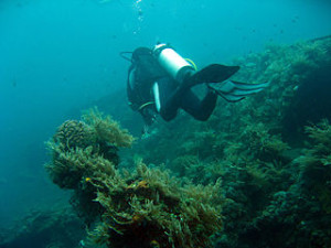 USAT Liberty Wreck Dive 300x225 Favorite Dive Locations in Bali