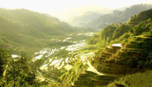 Ifugao Rice Terraces 300x172 Travelling in the Cordilerra