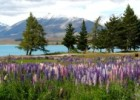 Lake Tekapo Scenic Resort Backpackers Budget Review