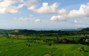 Rice_Paddies,_Tirtagangga,_Bali_(492067426)