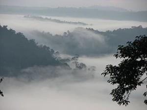 Sunrise_in_Danum_Valley,_Borneo