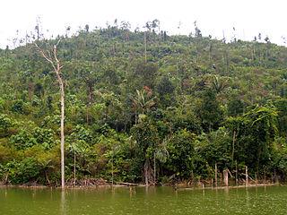 River_and_forest_in_Bogor,_West_Java